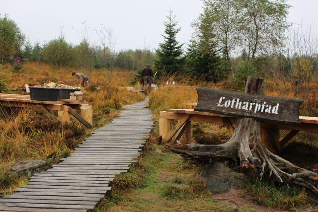 """Ein Bohlenweg führt zum Lotharpfad im Schwarzwald. Links das Schild """"Lotharpfad"""", im Hintergrund Bäume und Sträucher, die nach dem Orkan wieder hochgewachsen sind."""