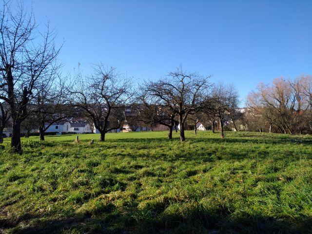 Eine Grünfläche mit Bäumen und Gebüsch, die bebaut werden soll.