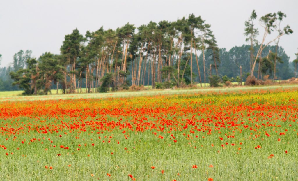 Acker in den Farben rot, grün, gelb. Aufgenommen in Brandenburg