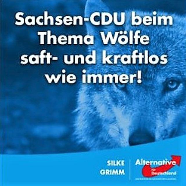 """AfD in Sachsen in """"Facebook"""": """"Sachsen-CDU bei Thema Wölfe saft- und kraftlos wie immer!"""" Dabei wetteifern doch CDU und AfD bereits miteinander im Wettlauf der Wolfs-Killer."""