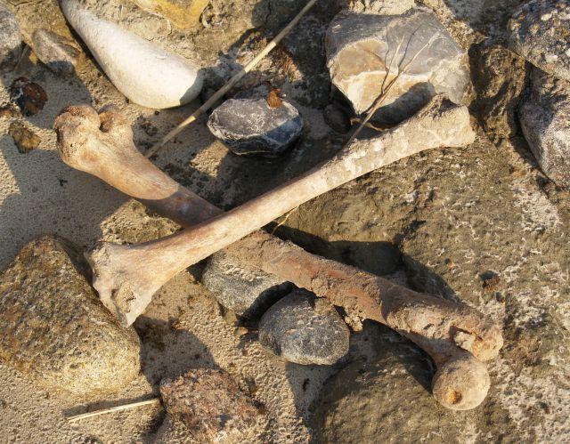 Menschliche Knochen liegen offen am Strand in Dänemark.