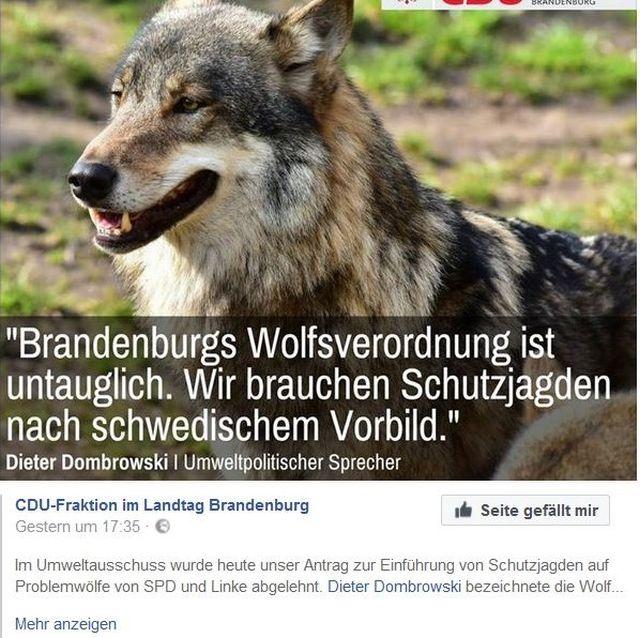 """Unter einem Foto eines Wolfes steht der TexT """"Brandenburgs Wolfsverordnung ist untauglich. Wir brauchen Schutzjagden nach schwedischem Vorbild""""."""