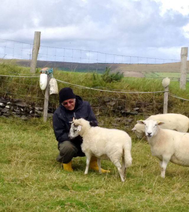 Drei Schafe mit dem Autor des Beitrags.