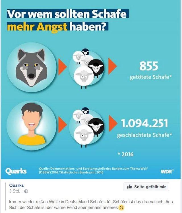 855 Schafe wurden 2016 in Deutschland von Wölfen gerissen, aber über 1 Million Schafe wurden zum menschlichen Verzehr geschlachtet.