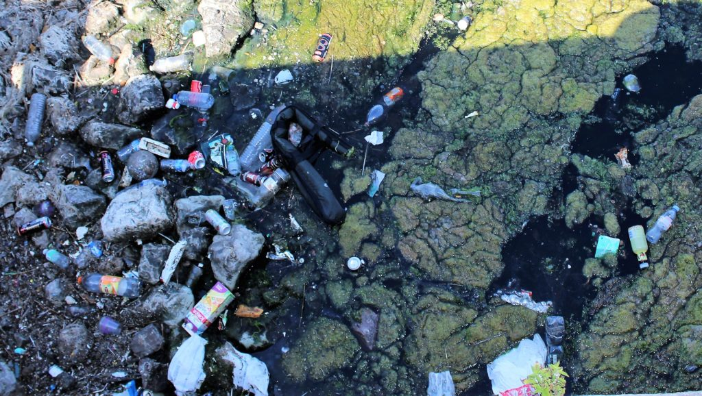 Eine 'bunte' Vielfalt von Kunststoffflaschen, Getränkedosen und weiterem Abfall im Hafenbecken - umgeben von grünen Algen.