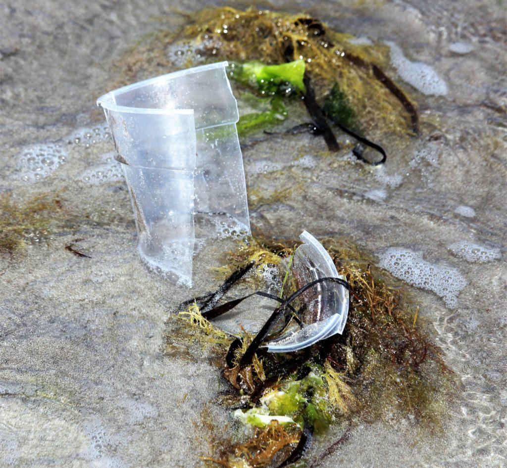 Ein zerbrochener durchsichtiger Plastikbecher auf dem Sandstrand. Die Wellen umspülen ihn, und Seetang hat sich an ihm verfangen.
