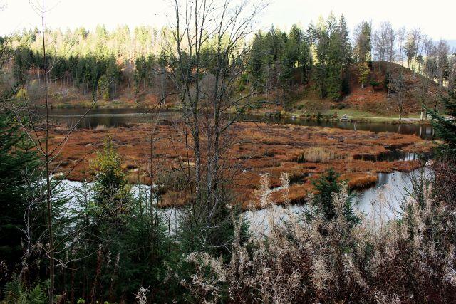 Im Vordergrund kleinere Bäume und Sträucher, dann der Nonnenmattweiher. Auf ihm schwimmt eine leicht bewachsene Moorschicht.