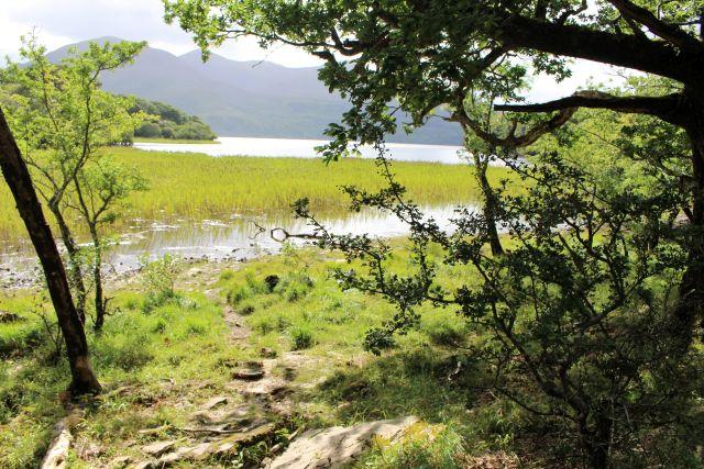 Blick durch Bäume auf das Loch Leabe, das hier am Ufer dicht mit Schilf bewachsen ist.