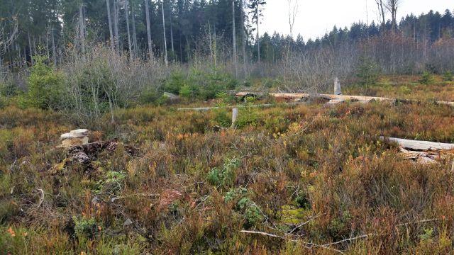 Mit grünen und bräunlichen Pflanzen bewachsene Moorfläche.