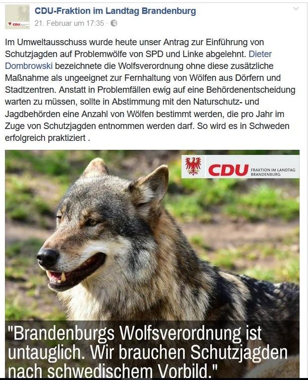 """Ein Wolf im Bild eines Facebook-Posts der CDU in Brandenburg mit der Aufforderung """"Schutzjegden"""" auf Wölfe durchzuführen."""