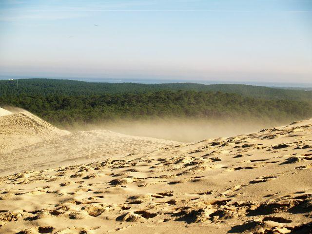 Spuren im Sand der Düne von Pilat, die sich 100 Meter über den Strand erhebt. Im Hintergrund grüne Wälder, auf die die Düne zuwandert.