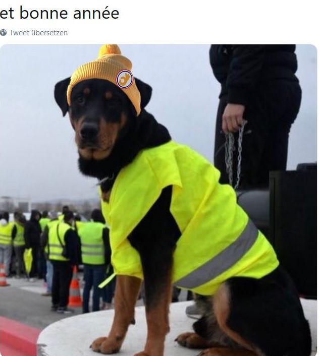 Ein sitzender Hund it gelber Weste und Wintermütze auf dem Kopf.
