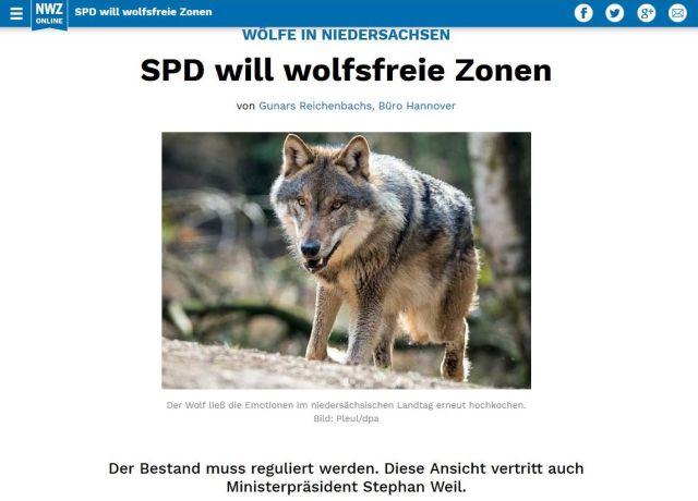 SPD will wolfsfreie Zonen, so der Text mit einem Bild von einem Wolf.