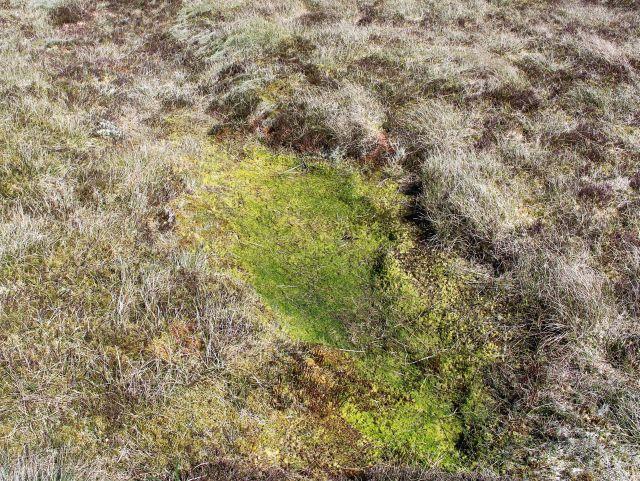 Grünlich gefärbte kleine Vertiefung, die in den Vorjahren mit Wasser gefüllt war.