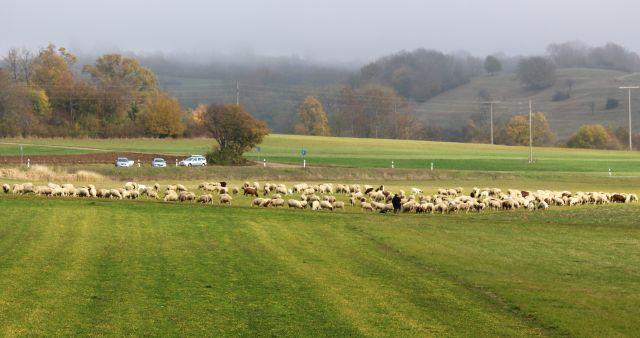 Im Vordergrund auf einer grünen Wiese eine Schafherde. Im Hintergrund der sehr ländlichen Region - Schwäbische Alb - drei Autos.