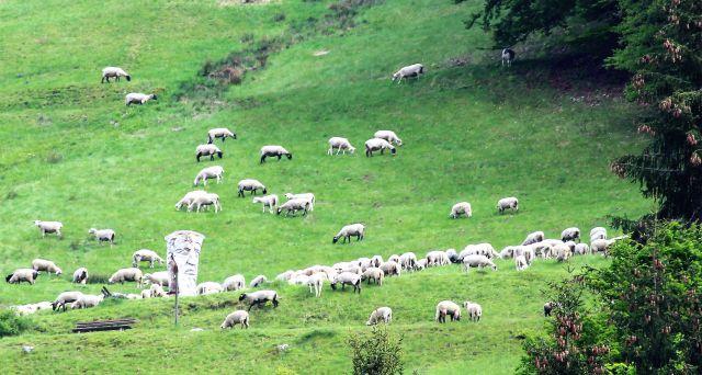 Schafe auf einer grünen Weide. In der Mitte eine Holzskulptur, die einen große Kopf darstellt.