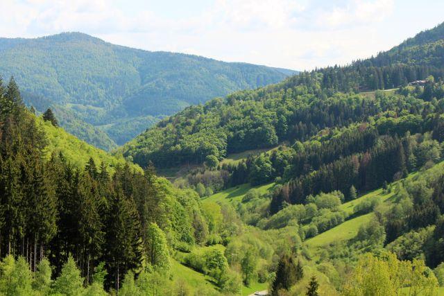 Grüne Kiefern und Laubbäume sowie kleinere Wiesen dazwischen im Tal und auf der gegenüberliegenden Höhe.