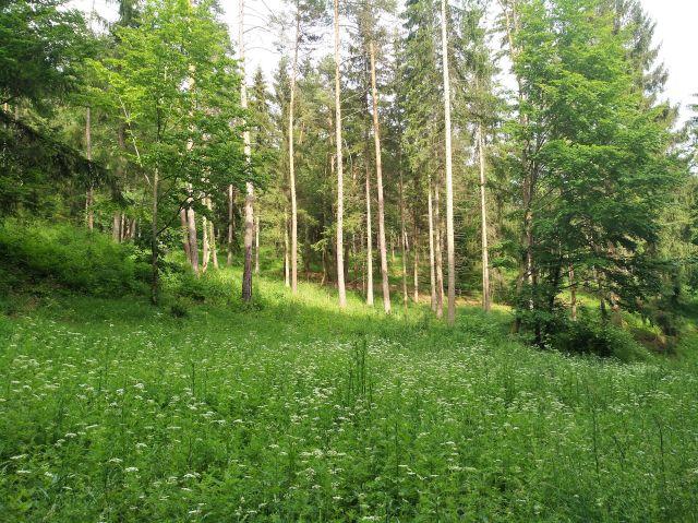 Im Vordergrund eine Wiese mit Blütenpflanzen, dahinter ein lichter Mischwald. Die Sonne fällt durch die Kronen der Bäume bis auf den Boden und lässt dort viele grüne Pflanzen wachsen.