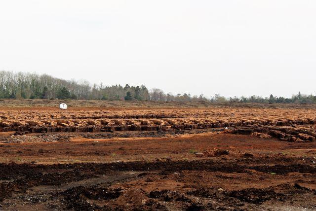 Gestochener Torf wird schräg aufgeschichtet. Eine große braune Fläche wird abgebaut.
