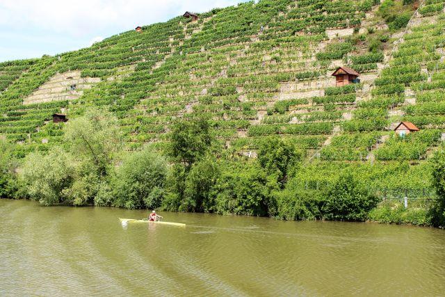 """Steil erheben sich die Weinberge über den Neckar. in: """"Der Neckar: Vom 'wilden Fluss' zur Wasserstraße. Ein unterschätzter Fluss als Lebens- und Wirtschaftsader"""" – www.deutschland-geliebte-bananenrepublik.de"""