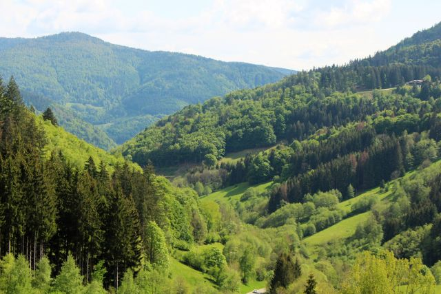 Blick auf den Schwarzwald bei Todtnau: Laub- und Nadelbäume.