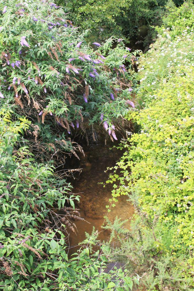 Der River Carnon ähnelt über weite Strecken eher einem Bach. Hier fast zugewachsen mit überhängendem Flieder und Gräsern.