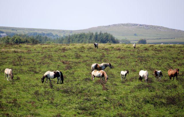 Pferde auf einer Weidefläche.