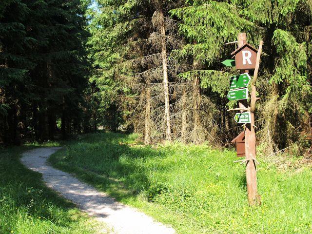 Grüne Bäume und ein kleiner Waldweg. Davor ein Holzpfahl mit kleinen Wegweisern.