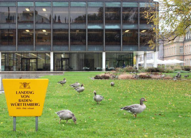 Mehrere Graugänse vor dem Landtag in Stuttgart. Ein gelbes Schild nennt den Ort. Große Scheiben auf drei Stockwerken.