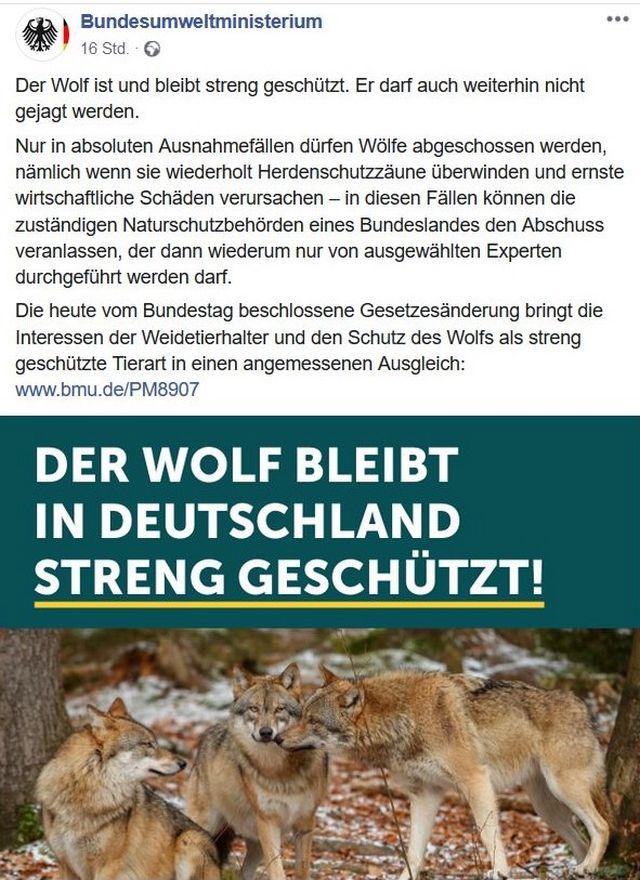 """Facebook-Post des Bundesumweltministeriums mit einer Abbildung von drei Wölfen. Titel """"der Wolf bleibt in Deutschland streng geschützt"""""""