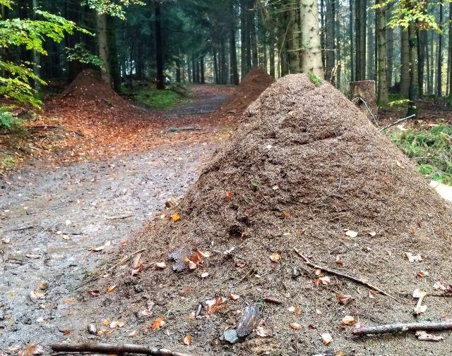 Ein hoher Ameisenhügel im Vordergrund, zwei weitere dahinter an einem Waldweg.