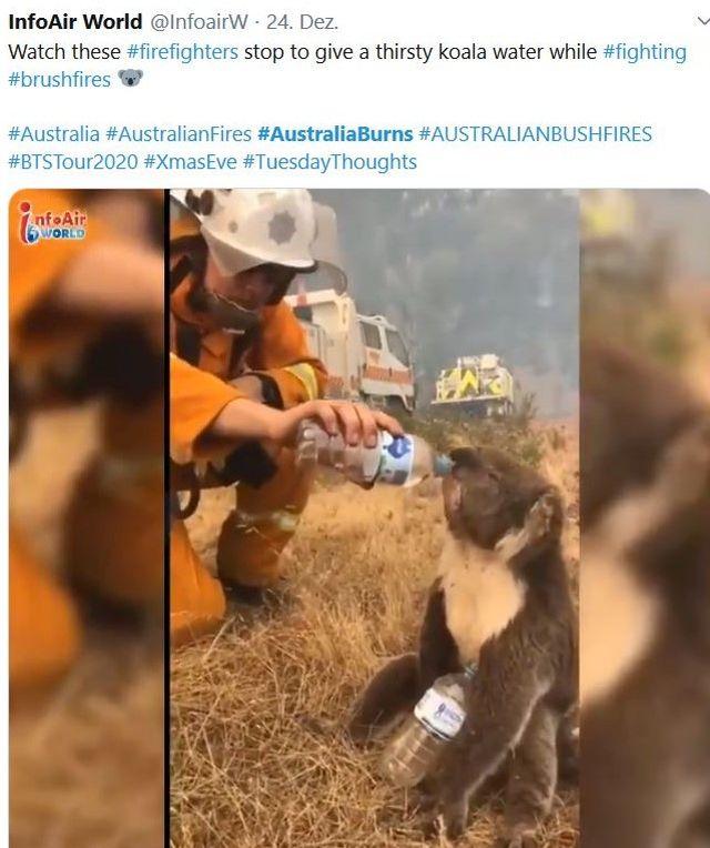 Ein bräunlicher Koala bekommt Wasser von einem Feuerwehrmann aus einer Flasche.n