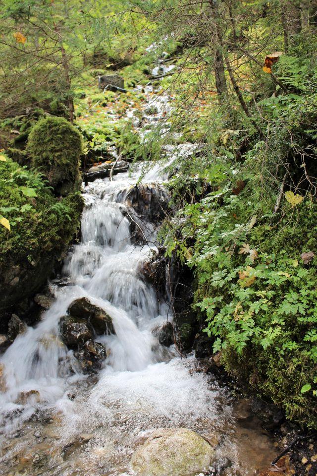 Kleiner Bach, der über größere Steine fließt. Umgeben von grünen Pflanzen.