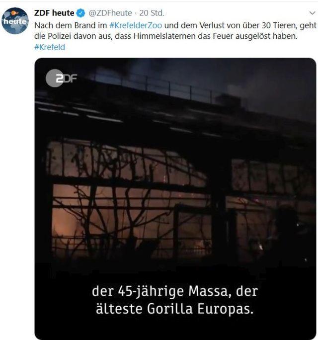 """Foto vom brennenden Affenhaus in Krefeld. Eingeklinkter Text: """"der 45-jährige Massa, der älteste Gorilla Europas"""". Er war auch unter den Opfern."""