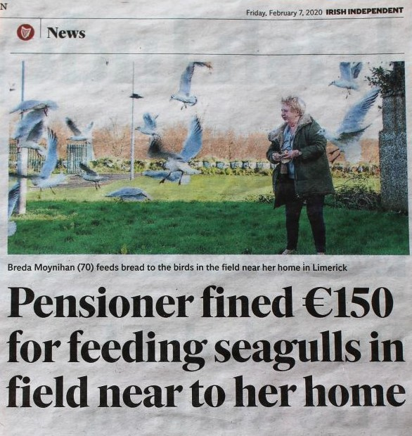 "Ausriss aus Irish Independent, Text: ""Pensioner fined 150 Euro for feeding seagulls in field near her home."""