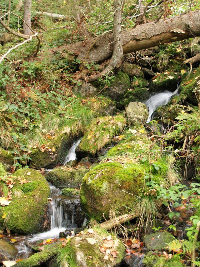 Ein kleines Rinnsal läuft zwischen bemoosten Steinen und Gras.