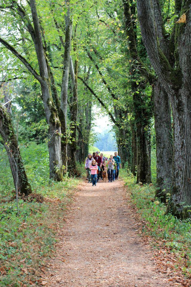 Gruppe von Personen, darunter auch Kinder gehen durch eine Allee alter Bäume im Wald.