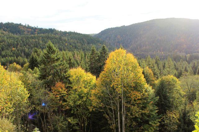 Herbstlich gefärbter Mischwald.