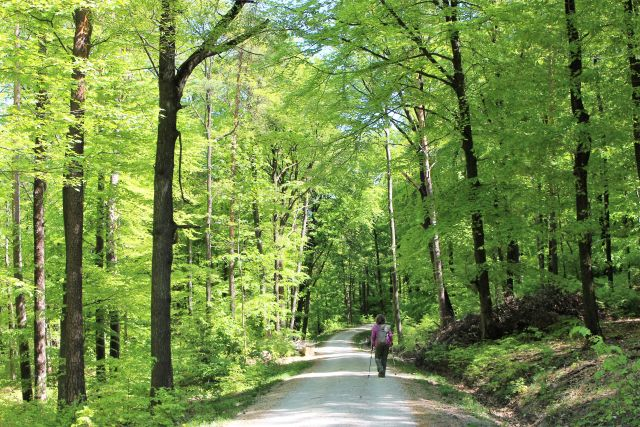 Eine Frau mit Wanderstöcken auf einem fein geschotterten Waldweg. Grüne Blätter an den umgebenden Bäumen.
