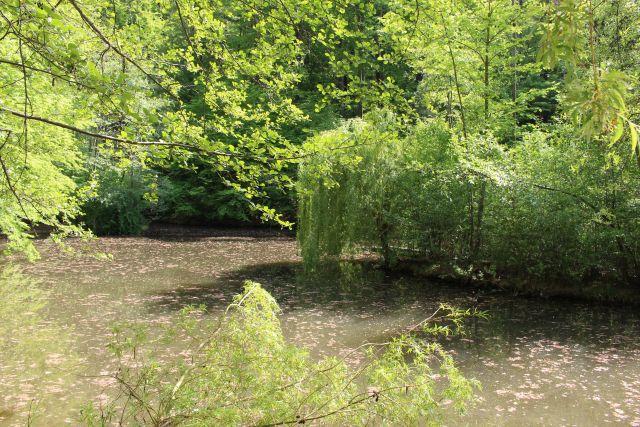 See auf dem Blätter und Blütenstaub schwimen. Er ist umgeben von grünen Pflanzen.