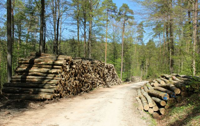 Eingeschlagene Baumstämme links und rechts vom geschotterten Forstweg.