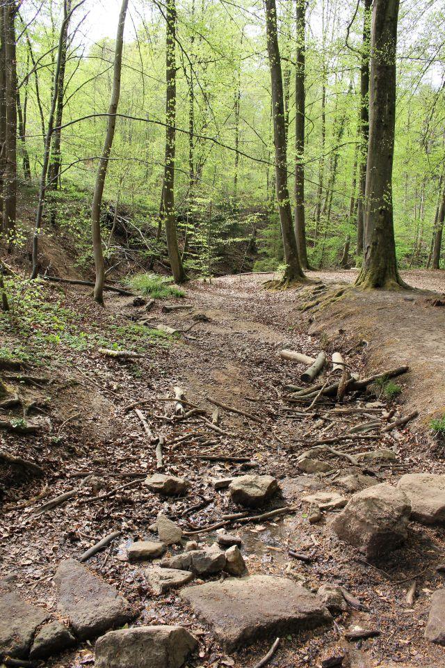 Ausgetrocknetes Bachbett in einem lichten Mischwald.
