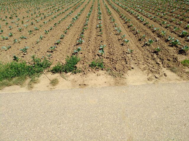 Vorne ein aspaltierter Feldweg, dahinter ohne Übergang die braunen Ackerfurchen.