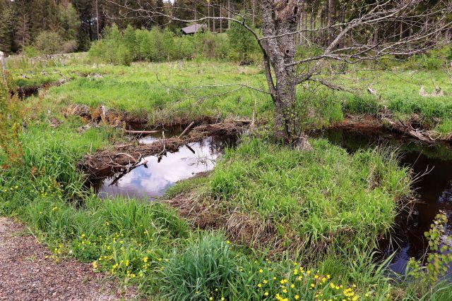Kleiner Damm aus Ästen. Der Bach ist aufgestaut.