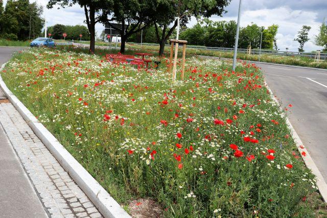 Weiße und rote Blüten auf einem Parkplatz an der Autobahn.