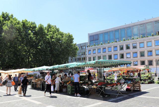 Markt in Stuttgart vor dem Rathaus, links einige große Platanen.