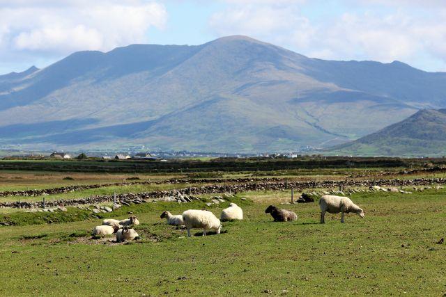 Ein Bergmassiv vor leicht bewölktem Himmel. Im Vordergrund Schafe.