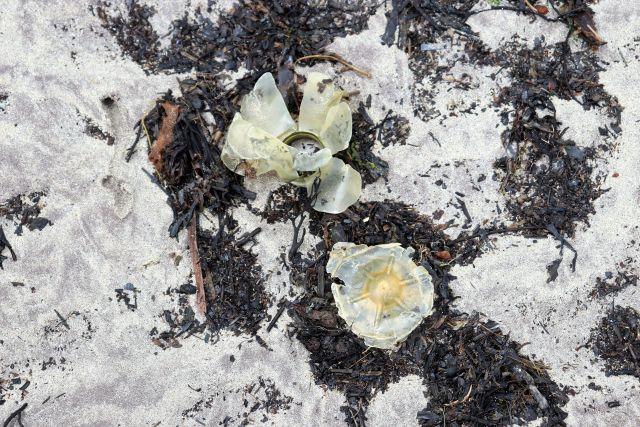 Reste von Kunststoffflschan mit Seetang am Strand.