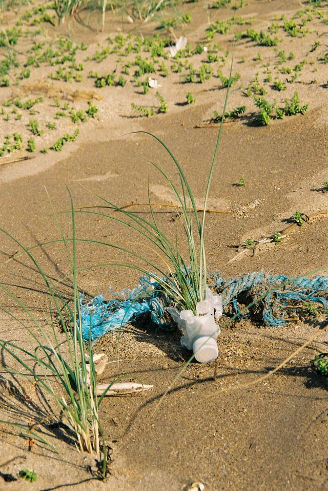 Aus einer durchsichtigen Kunststoffflasche am Strand wächst bereits Strandhafer. Daneben ein blaues Tau.