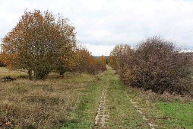 Betonsteine des früheren Kolonnenwegs an der DDR-Grenze. Heute wächst Gras und links und rechts Bäume und Sträucher.